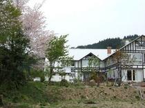 山桜が満開の春の裏庭