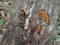 バーベキューエリアの裏、樹液の出る昆虫の盛り場