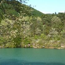 *大瀞、新緑の季節の風景。