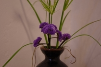 季節の花々