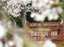 桜(入り口)