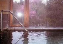 温泉から望む山桜