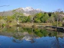 5月の朝のいもり池