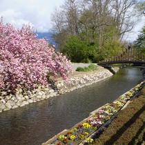 *【ビレッジの景色】春は桜をはじめ色とりどりのお花に囲まれるビレッジ。