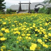 *【ビレッジの景色】一面のマリーゴールドの先に、ビレッジ安曇野がございます。