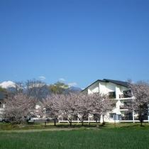 *【春】春は桜の木々に囲まれるビレッジ安曇野。周辺には色とりどりのお花が咲く季節。