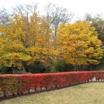 *【秋】春夏秋冬の景色をご覧頂けるビレッジ。秋は色付く紅葉の眺め。