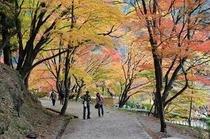 香嵐渓  紅葉のトンネル