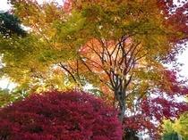 北軽井沢の紅葉
