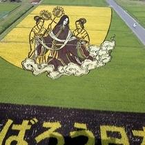 <周辺・景観>田んぼアート