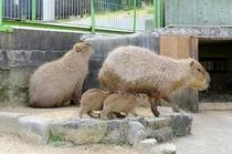 常盤公園 動物園 カピバラ
