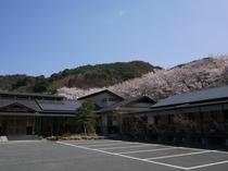 桜With外観
