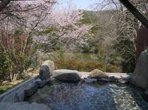 温泉With桜