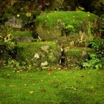 百年の歴史を誇る「コケ」。青々と光る中に、真っ赤な落ち葉がかわいい!