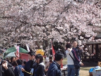 09桜の里祭り