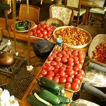 *【おやじ農園】オーナーが丹精込めて作った野菜たち(一例)