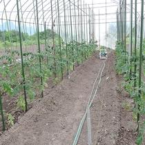 *【おやじ農園】畑の収穫体験も可能です(別途料金)