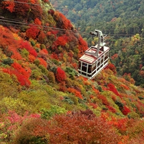 仁田峠の紅葉、山頂やロープウェイから見る景色は圧巻!!