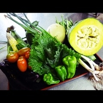 女将自家製の朝採り野菜