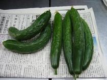 自家製野菜です、もちろん無農薬