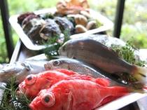 毎朝、沼津港より仕入れる魚介類