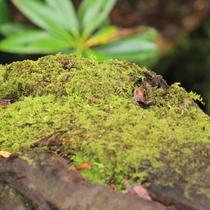 沢のせせらぎを聞きながら、原生林の森をゆったりと歩き、日々のストレスを解消しよう♪