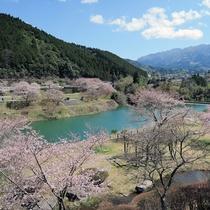 *熊本でも有名な桜の名所【市房ダム湖】お花見ドライブがおすすめ♪