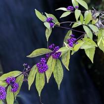 里山の自然