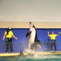 *浅虫水族館/大人気のイルカショーは毎日開催!圧巻のパフォーマンスを披露します。