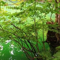 *鶏頭場の池/ブナやミズナラのうっそうとした森に囲まれた魅力溢れる池。