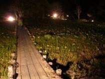 笠岳水芭蕉公園