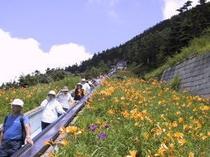 夏の横手山エスカレーター