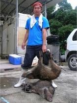 てーる、琉球イノシシ(カマイ)猟