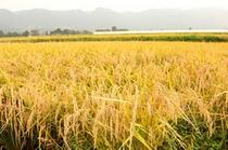 阿蘇の四季では、自社所有の田畑で野菜やお米を育て、収穫しています。阿蘇の大自然で育った自慢の野菜達を