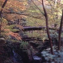 「秋の景色」秋の気配を感じる