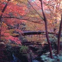 「秋の景色」木々が色づく。この季節こその喜び