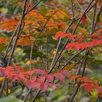 *紅葉/秋は美しく燃えるような紅葉美にうっとり