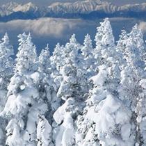 *冬の景色/辺り一面、真っ白な霧氷に包まれる冬は幻想的な雰囲気!