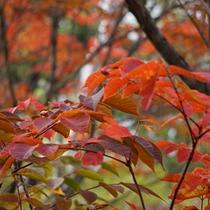 *紅葉/緑や黄色や赤など、絵画のような美しさ