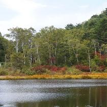 *紅葉/豊かな緑が徐々に紅葉の美しさに染まる