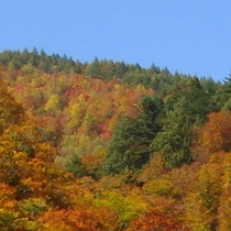 *秋の景色/10月から11月にかけて見ごたえのある紅葉をご覧頂けます。
