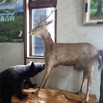 *館内の様子/館内には熊や鹿の剥製が登場!この地方ならではの光景を見るのも旅の楽しみのひとつ。