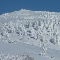*冬の森吉山/白銀の世界が一面に広がる、冬の森吉山。樹氷の群れが広がります!