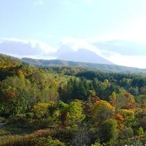 *393号線から見える紅葉の風景