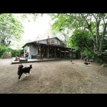 【お庭】看板犬もいます(*^-^*)