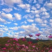 【景色】四季折々の花々。大自然の中でのんびりお過ごしください。
