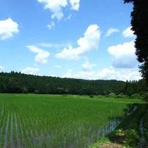 *田園風景②