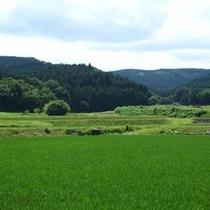*田園風景①