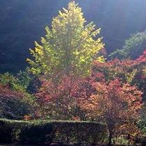 *紅葉を楽しめる秋の庭