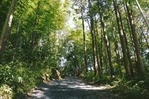 自然に囲まれた散策コース♪古野古道